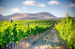 A Winelands Meander featured